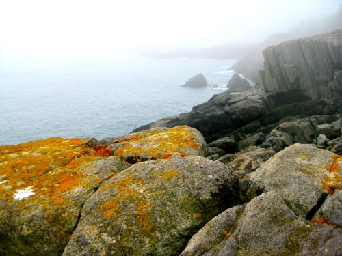 Lichen, fog and cliffs