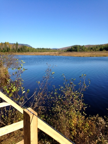 Stratton Brook Pond